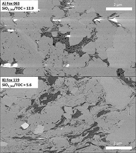Figure 5. FIB-SEM images of samples with high (A) and low (B) SiO2_bio/TOC exhibit contrasting organic pore sizes. A) Solid bitumen (dark grey) within the intracrystalline space of a microcrystalline quartz-rich matrix (most of the light grey material). Large organic-hosted pores are preserved, potentially due to the compaction-resistant rigid siliceous framework. B) Solid bitumen in a less siliceous matrix contains much smaller pores, potentially due to the higher compressibility of the matrix and greater effective stress placed on the organic matter particles. Bright white colors are imaging artifacts from charge buildup on the sample surface. Figures from Knapp et al. (2020).
